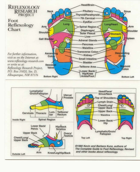 http://www.reflexology-research.com/Images/foot.jpeg